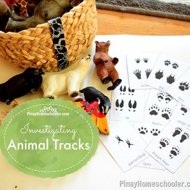 er relationship identifying animal tracks