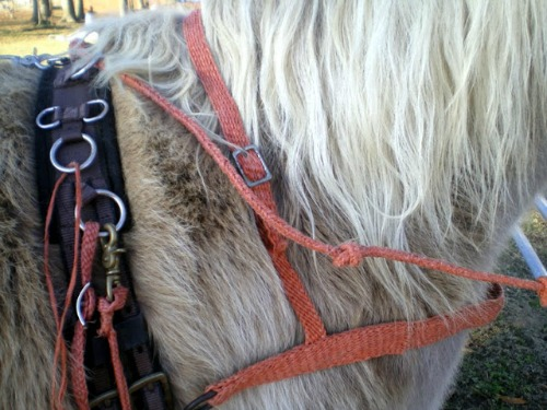 2009 - Braided breast collar & neck strap