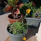 Gardening 2011 - 100_7793.JPG