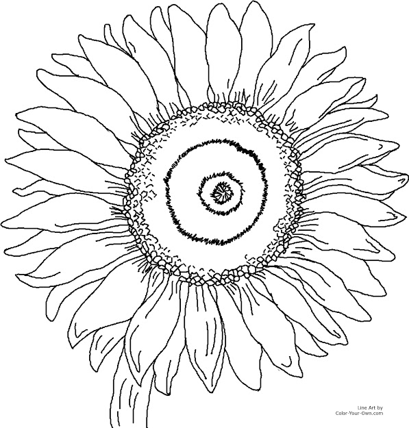 Pretty Sunflower Coloring Page For The    Printable