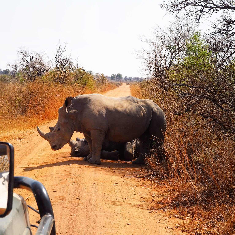 wild-rhino-day-london-lifestyle-travel-blog