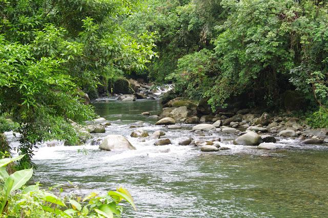 Rio Calovébora, route de Santa Fe à Guabal, 300 m (Veraguas, Panamá), 19 octobre 2014. Photo : J.-M. Gayman