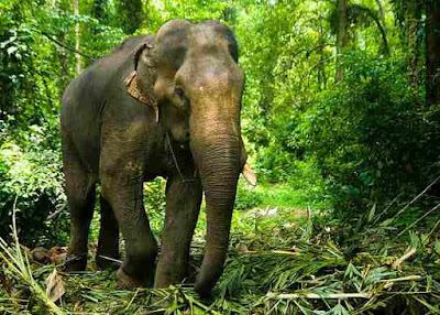 भारत मे पाए जाने वाले 50 जंगली जानवर | Wild Animals of India