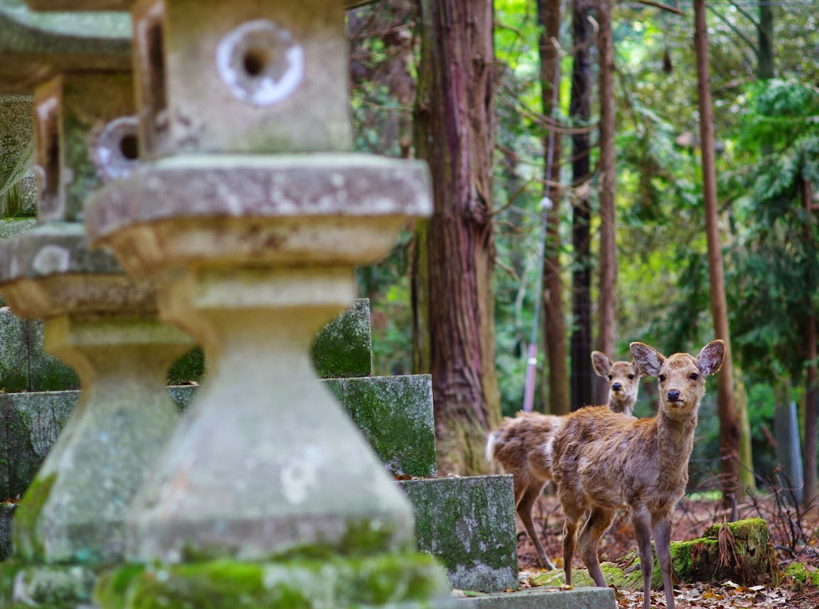 2014日本漫遊 PARTI(BY K-01 FA35 DA14 DA70 FA70-210)