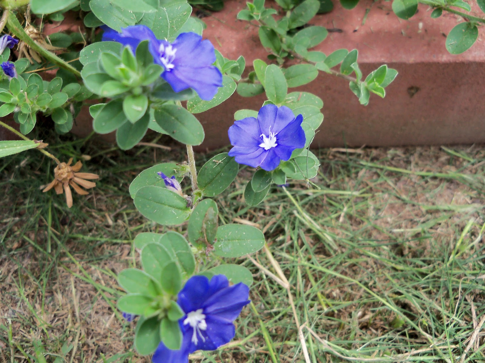 Gardening 2010, Part Three - 101_5302.JPG