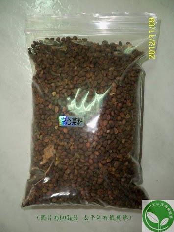 有機空心菜種子