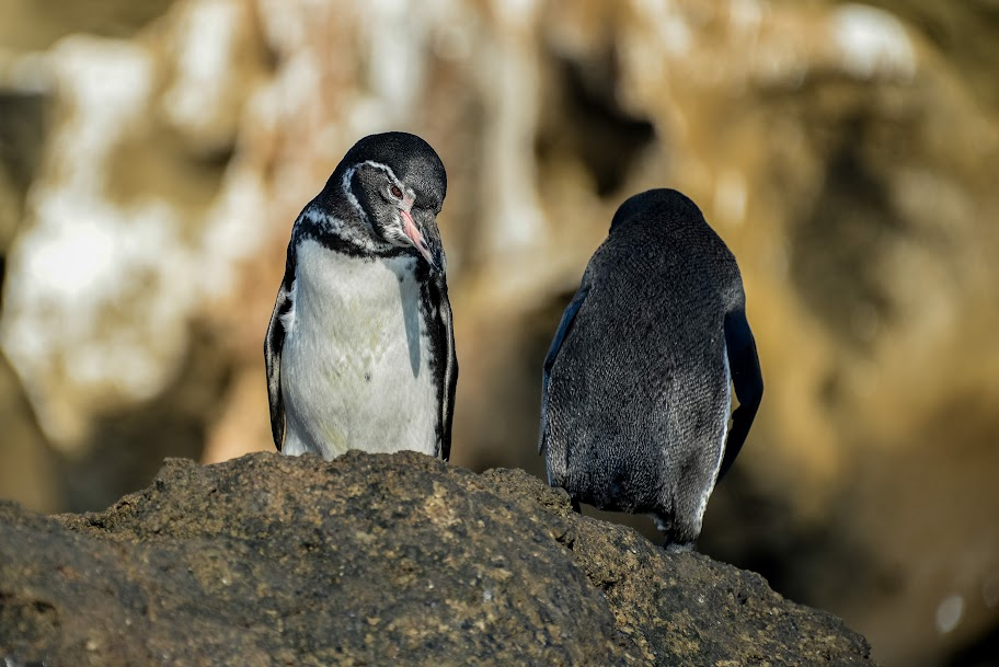 galapagos - Galapagos_FB-138.jpg