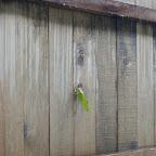 Insectos en todas las paredes