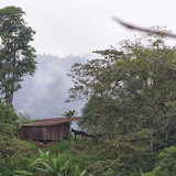 Los Cedros, 1400 m, Montagnes de Toisan, Cordillère de La Plata (Imbabura, Équateur), 18 novembre 2013. Photo : J.-M. Gayman