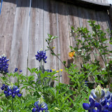 Gardening 2013 - 115_5677.JPG