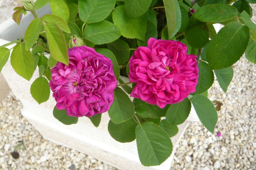 [Spring+flowers9o%5B3%5D]