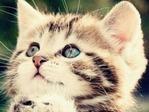 Cute=c-Cat01 (5)