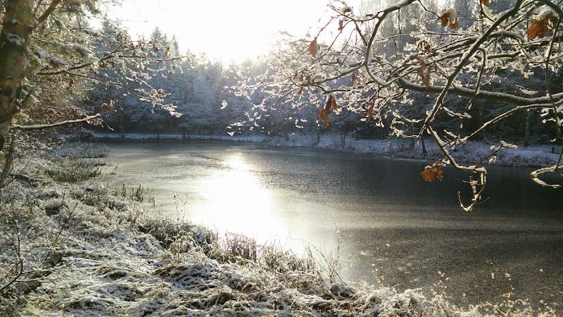 Der Brausebach im Winter