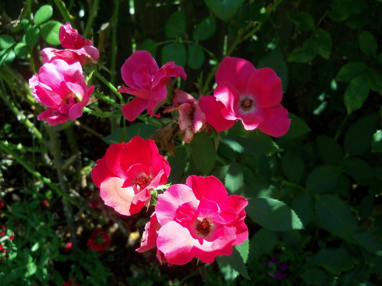 Gardening 2010, Part Three - 101_4459.JPG