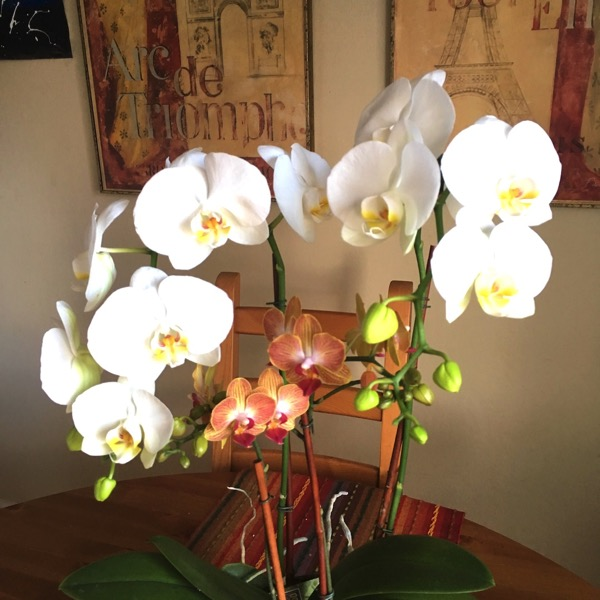 Orchids I've also had good experiences with flower delivery services - both as a sender and as a recipient. It's nice to open the door and be surprised with ...