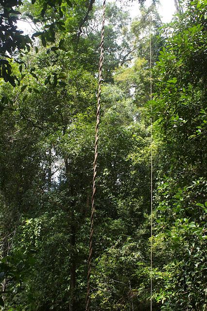 Poring (Sabah, Malaisie), 31 juillet 2011. Photo : J.-M. Gayman