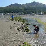 Oboz w Irlandii 2011 - P1070554.JPG