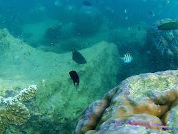 family trip pulau pari 090716 GoPro 05