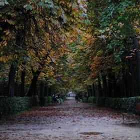 Plan Director del arbolado del parque del Retiro: más de 19.000 árboles