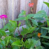 Gardening 2012 - 115_1537.JPG