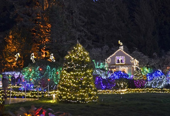 Shore Acres Lights3