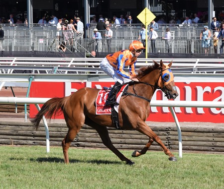 emirates stakes_gingernuts 7