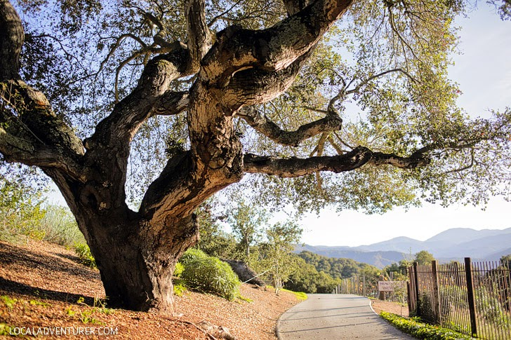 Carmel Valley Wineries and Wine Vineyards.