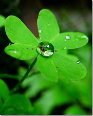 Folha verde - orvalho