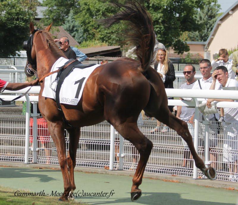 Photos Maisons-Laffitte 5-07-2015 IMG_2453