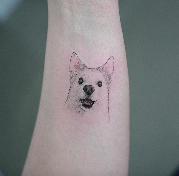 esta_perfeito_canina