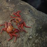 galapagos - Galapagos_FB_2-167.jpg