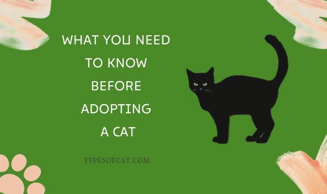cat adoption,adoption,pet adoption,my cat adoption,adult cat adoption,senior cat adoption,kitten adoption,virtual cat adoption,cute kitten adoption