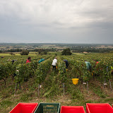 2013 vendanges du chardonnay - 2013%2B09%2B28%2BGuimbelot%2Bvendanges%2Bdu%2BChardonnay%2B110.jpg