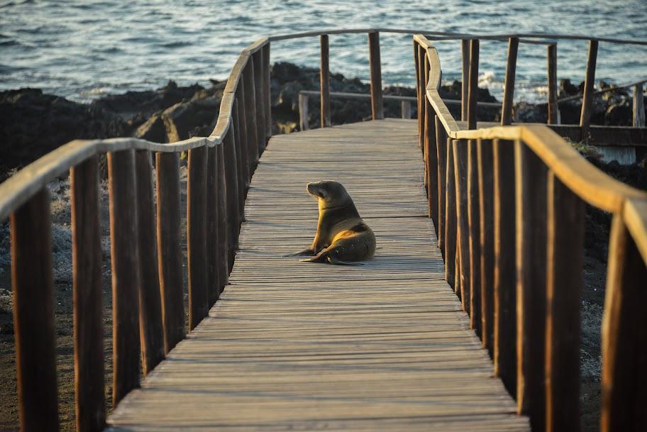 galapagos - Galapagos_FB-163.jpg
