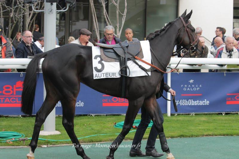 Photos Auteuil 7-11-2015 (48h de l'obstacle) IMG_6325