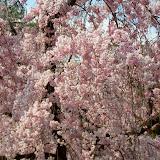2014 Japan - Dag 10 - tom-SAM_0568-0016.JPG