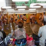 2014 Japan - Dag 11 - britt-DSC03687-0098.JPG