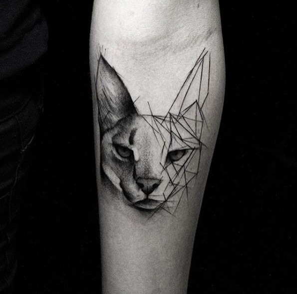 este_esboço_gato