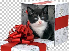 christmascat02-081209.jpg