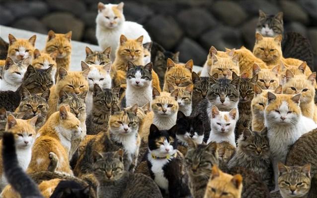 Διαθήκη για 50 γάτες