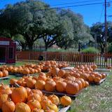Pumpkin Patch 2014 - 116_4420.JPG