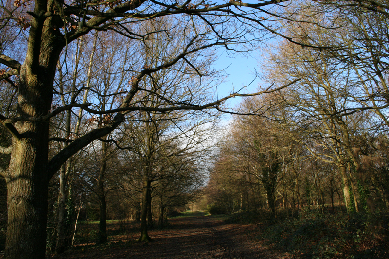 10 banstead heath woods2