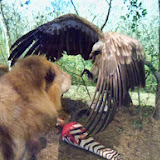 Houston Museum of Natural Science - 116_2821.JPG