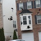 2012-12-20 THU - Ravens Nevermore - Gaithersburg, MD #1vsM