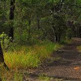 Chemin forestier à Ettalong (Umina Beach), New South Wales (Australie), 8 juillet 2010. Photo : Barbara Kedzierski