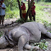 Mother and baby rhino found dead in Chitwan National Park