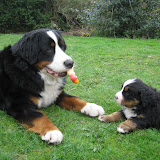 – Ganni leger med Lillesøster