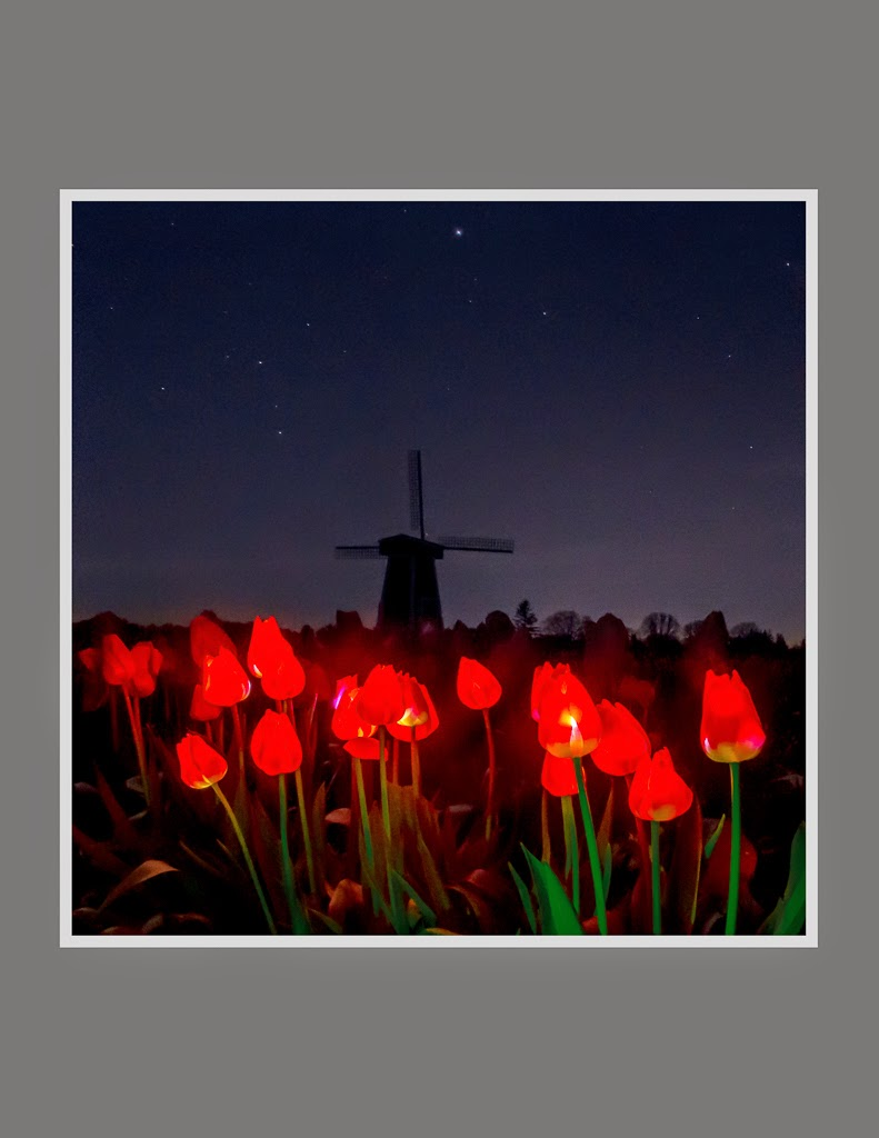 """Tulip Night"" by Valerie Henschel - Honorable Mention General A"