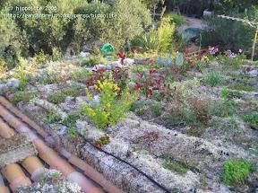 toiture végétale 100% bio