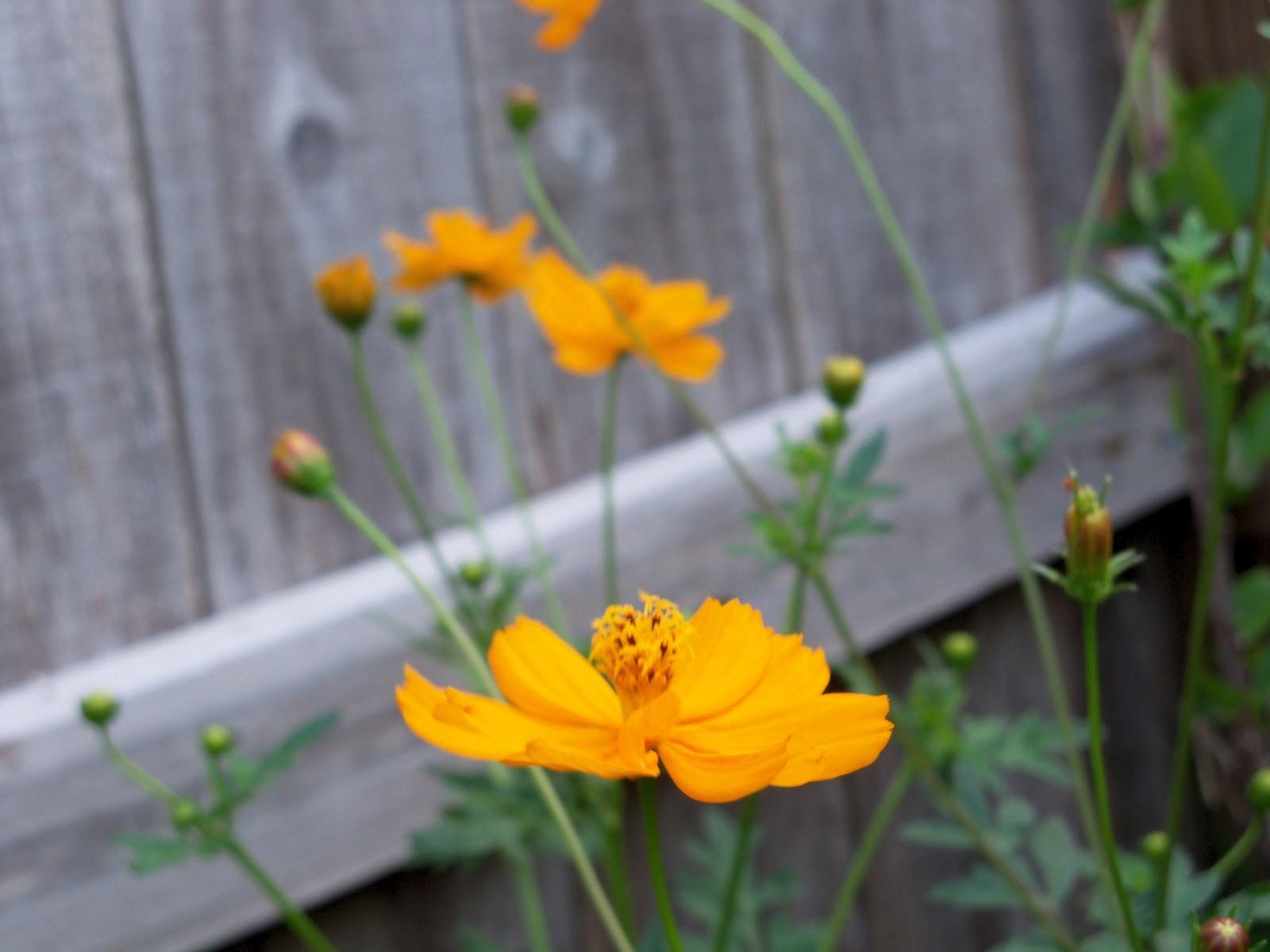 Gardening 2011 - 100_8237.JPG